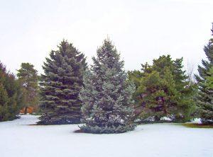 Heinen Landscape